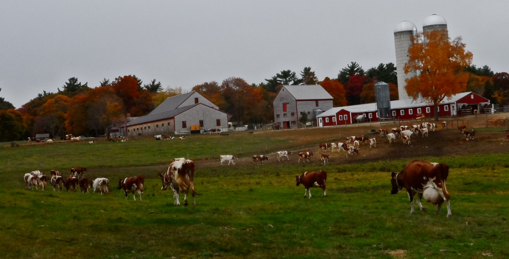 Hornstra Dairy Farm Norwell MA
